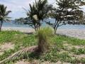 beachfront-for-sale-small-0